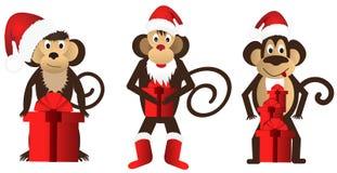 Macacos engraçados ajustados com um presente Fotos de Stock Royalty Free