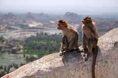 Macacos indianos foto de stock