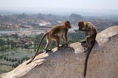 Macacos indianos imagens de stock