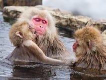 Macacos japoneses da neve Fotos de Stock Royalty Free