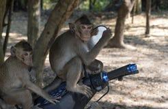 Macacos na bicicleta Fotos de Stock Royalty Free