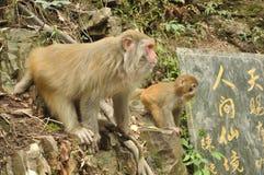 Macacos na linha Fotos de Stock Royalty Free