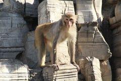 Macacos na montanha de pedra imagem de stock