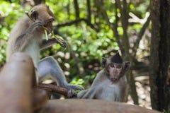 Macacos que relaxam em uma floresta foto de stock royalty free