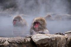 Macacos que relaxam na mola quente Fotos de Stock