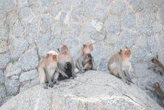 Macacos que sentam-se junto na rocha imagens de stock