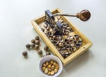 Macadamia καρύδια με την κροτίδα Στοκ Εικόνες