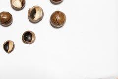 Macadamia καρύδια Στοκ εικόνα με δικαίωμα ελεύθερης χρήσης