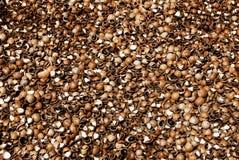 macadamia κοχύλια καρυδιών Στοκ φωτογραφίες με δικαίωμα ελεύθερης χρήσης