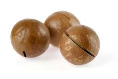 Macadamia royalty-vrije stock afbeelding