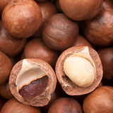 Macadamia Royalty-vrije Stock Foto's
