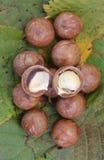Macadamia stockfotografie