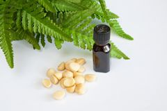 Macadamia Zdjęcie Stock