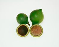 macadamia Imagen de archivo