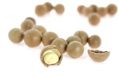 Macadamia Royalty Free Stock Images