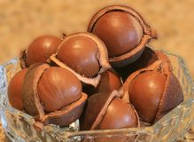 Macadamia dans les cosses Photos stock