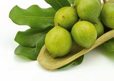 Macadamia in der Hülsen Lizenzfreie Stockfotos