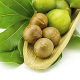 Macadamia in der Hülsen und im Oberteil Lizenzfreie Stockfotos