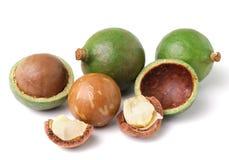 Macadamia dokrętki na białym tle Fotografia Royalty Free