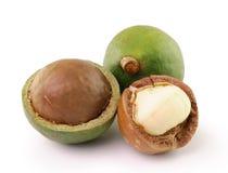 Macadamia dokrętki na białym tle Zdjęcia Royalty Free