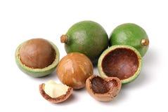 Macadamia dokrętki na białym tle Zdjęcia Stock