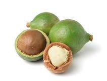 Macadamia dokrętki na białym tle Fotografia Stock