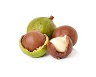 Macadamia dokrętki Zdjęcia Stock