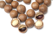Macadamia fruit  Royalty Free Stock Photos