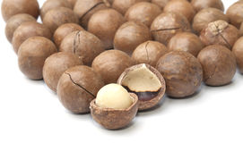 Macadamia fruit  Stock Photography