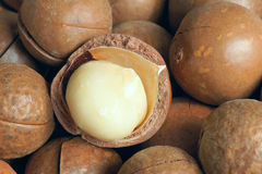 Macadamia fruits. The close-up of dried cooked macadamia fruits Royalty Free Stock Image