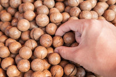 Macadamia hold by hand Royalty Free Stock Images