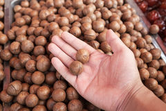 Macadamia hold by hand Stock Photography