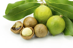 Macadamia in husk and shell Stock Images