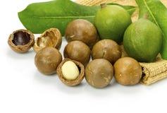 Macadamia in husk and shell Royalty Free Stock Photos