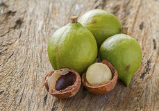 Macadamia in husk and shell Royalty Free Stock Image