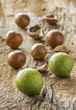 Macadamia in husk and shell Stock Photography