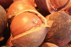 Macadamia im rauen Stockfoto