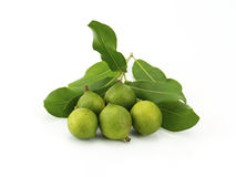 Macadamia In Husk Royalty Free Stock Images