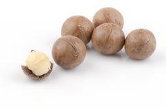 Macadamia (Macadamia integrifolia). Stock Afbeelding
