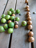 Macadamia-Muttern Stockfoto