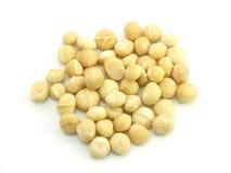 Macadamia Noot Stock Fotografie