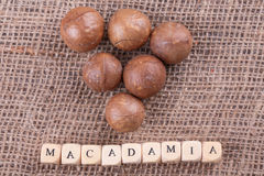 Macadamia noten stock foto