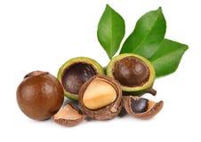 Macadamia noten op witte achtergrond Royalty-vrije Stock Afbeelding