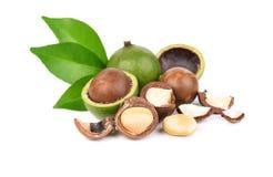 Macadamia noten op witte achtergrond Stock Fotografie