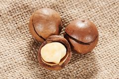 Macadamia nut Stock Photo