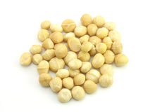 Macadamia Nut. In isolated white Stock Photography