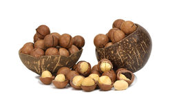Macadamia nut in coconut shell Royalty Free Stock Images