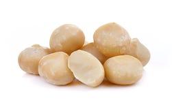Macadamia nut isolated on white background stock image