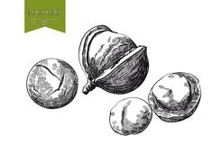 Macadamia nut Stock Photos