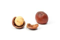 Macadamia nut and shell Royalty Free Stock Image